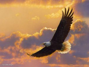 soaring-spirit-eagle